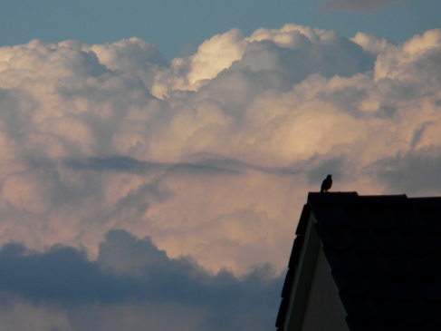 Amsel auf Dach vor Wolken