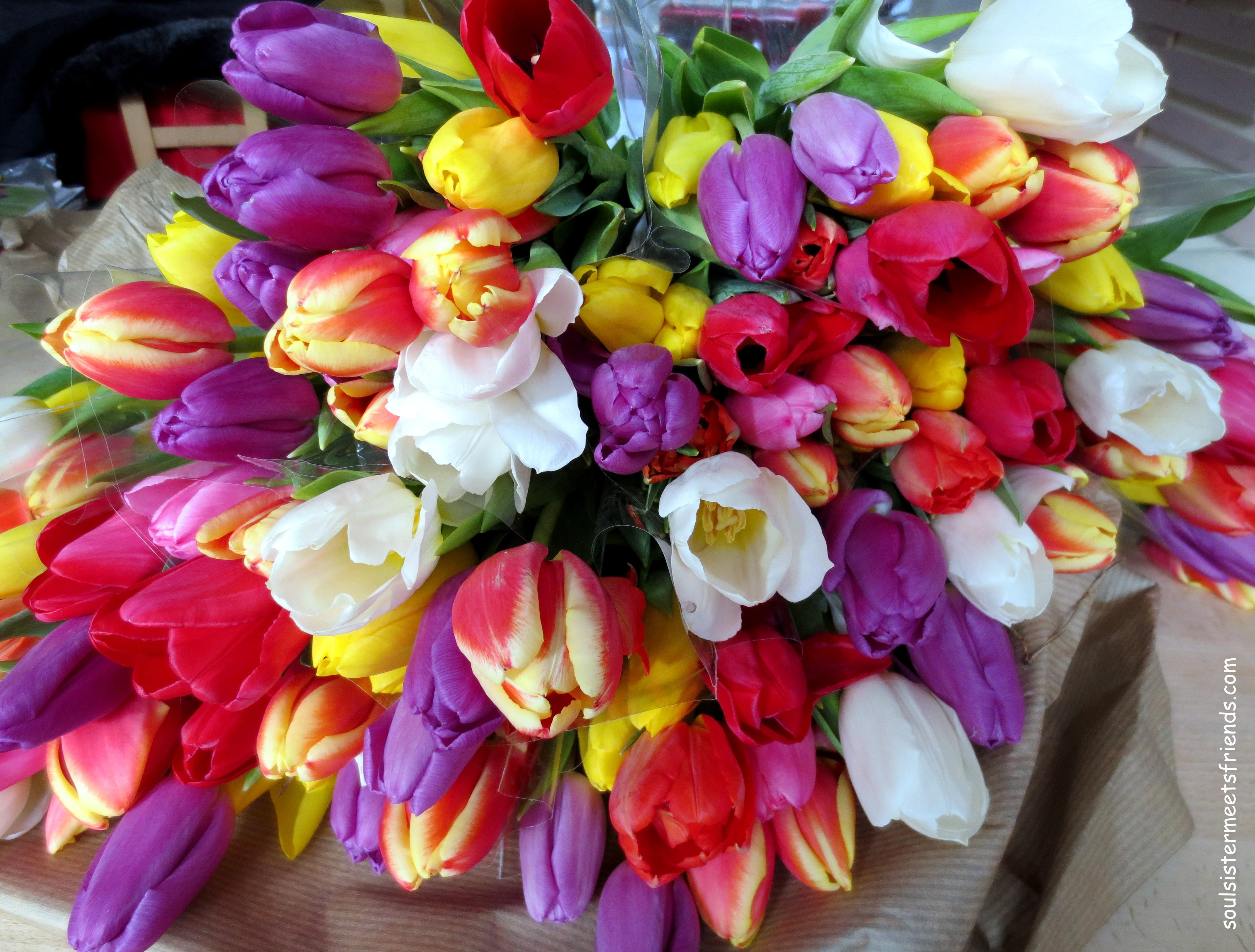 FDW Tulpen