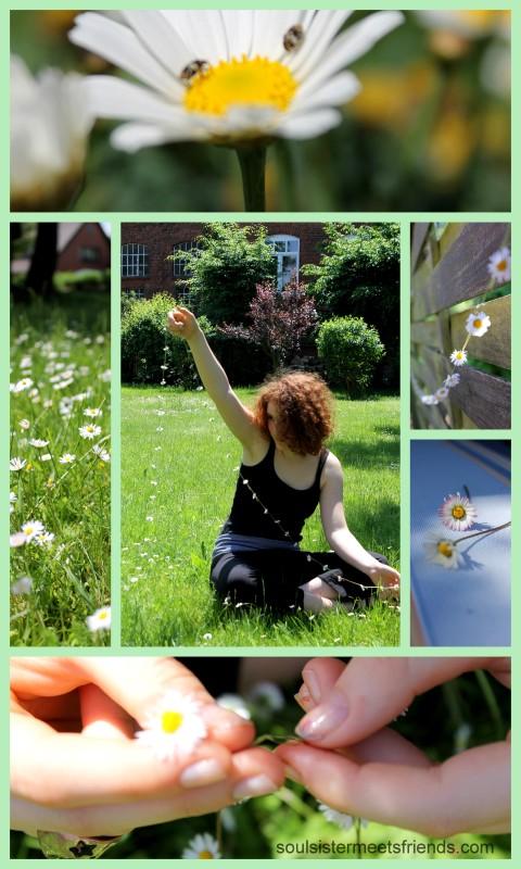 Gänseblümchen-Collage II